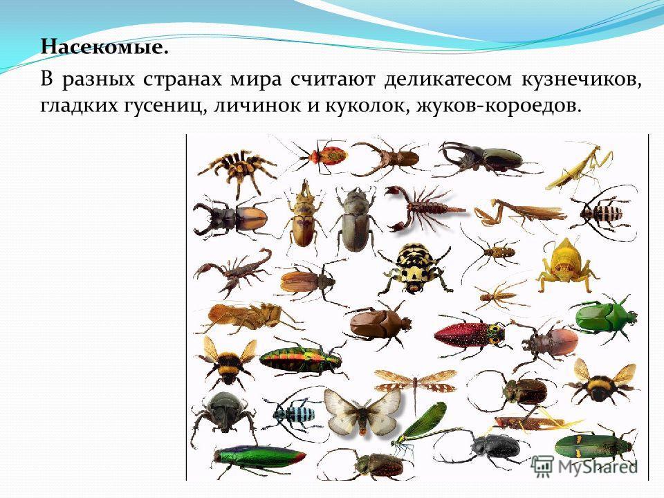 Насекомые. В разных странах мира считают деликатесом кузнечиков, гладких гусениц, личинок и куколок, жуков-короедов.