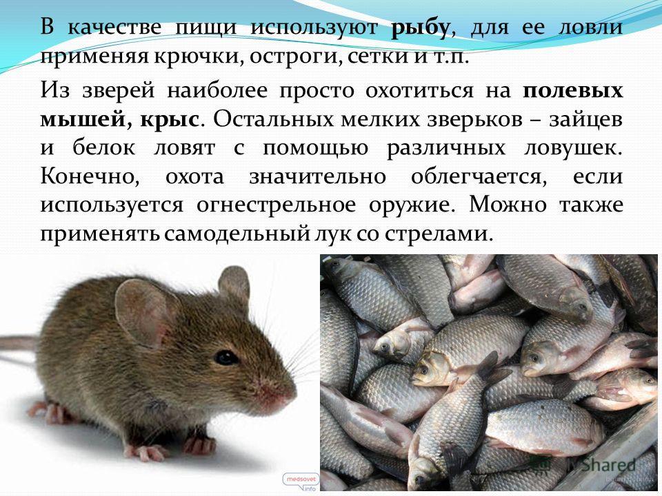 В качестве пищи используют рыбу, для ее ловли применяя крючки, остроги, сетки и т.п. Из зверей наиболее просто охотиться на полевых мышей, крыс. Остальных мелких зверьков – зайцев и белок ловят с помощью различных ловушек. Конечно, охота значительно