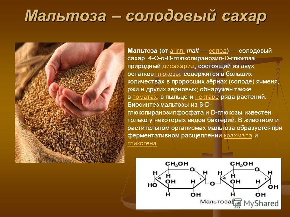 Мальтоза – солодовый сахар Мальтоза (от англ. malt солод) солодовый сахар, 4-О-α-D-глюкопиранозил-D-глюкоза, природный дисахарид, состоящий из двух остатков глюкозы; содержится в больших количествах в проросших зёрнах (солоде) ячменя, ржи и других зе