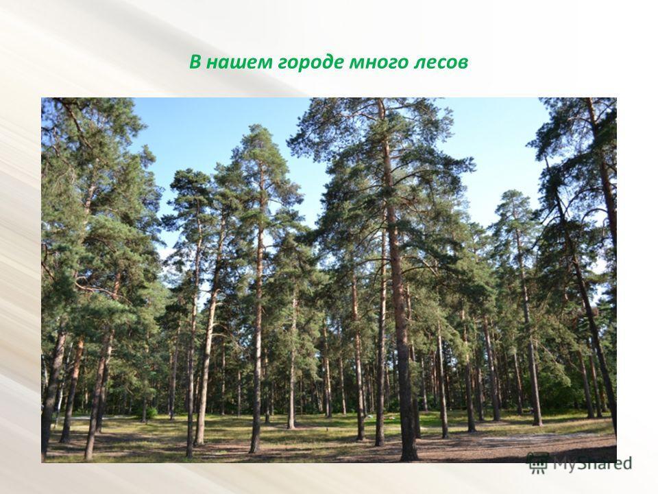 В нашем городе много лесов