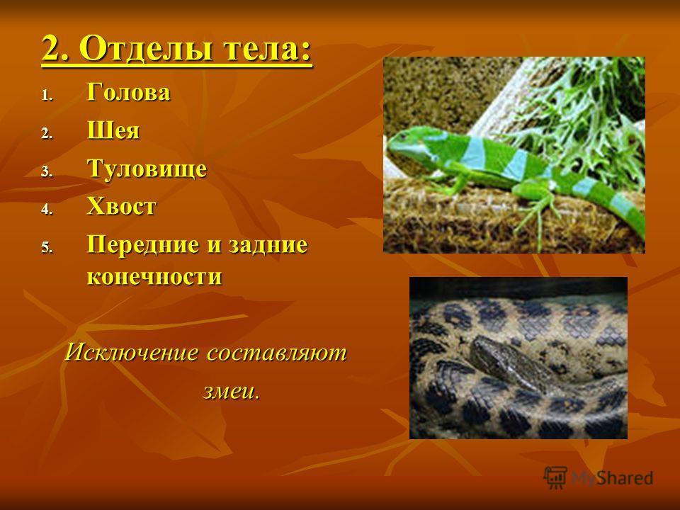2. Отделы тела: 1. Голова 2. Шея 3. Туловище 4. Хвост 5. Передние и задние конечности Исключение составляют змеи. змеи.