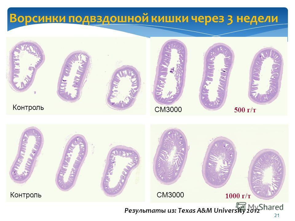Ворсинки подвздошной кишки через 3 недели Контроль CM3000 Результаты из: Texas A&M University 2012 500 г/т 1000 г/т 21