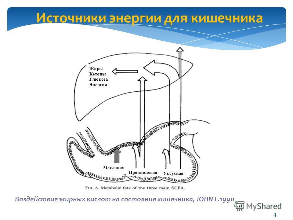 Источники энергии для кишечника Воздействие жирных кислот на состояние кишечника, JOHN L.1990 Масляная Пропионовая Уксусная Жиры Кетоны Глюкоза Энергия 4