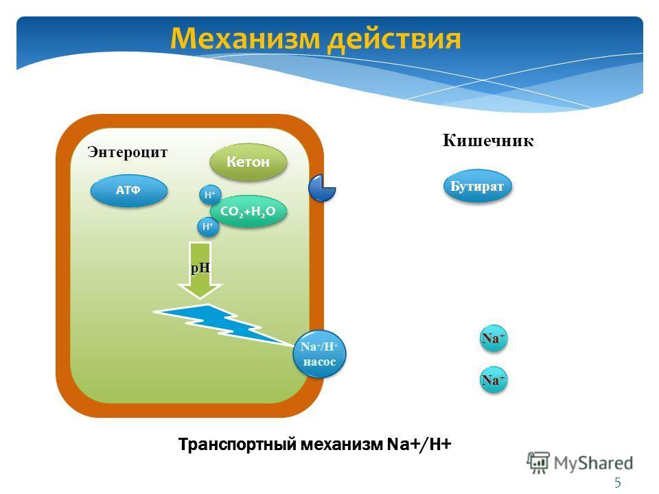 Транспортный механизм Na+/H+ Бутират Na + /H + насос Na + /H + насос Na + H+H+ H+H+ pH Энтероцит Кишечник АТФ Кетон CO 2 +H 2 O H+H+ H+H+ Механизм действия 5