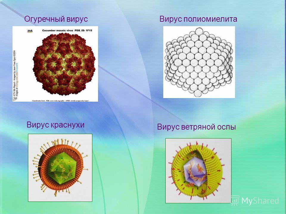 Вирус полиомиелита Огуречный вирус Вирус краснухи Вирус ветряной оспы