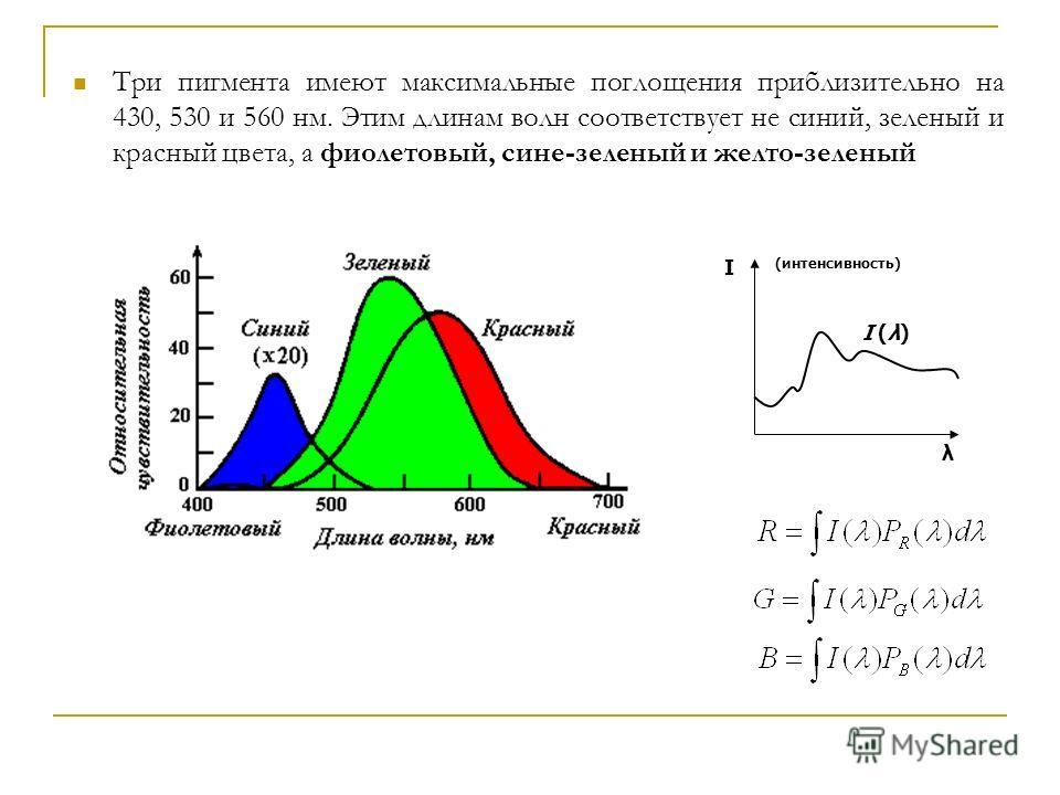 Три пигмента имеют максимальные поглощения приблизительно на 430, 530 и 560 нм. Этим длинам волн соответствует не синий, зеленый и красный цвета, а фиолетовый, сине-зеленый и желто-зеленый λ I (интенсивность) I (λ)