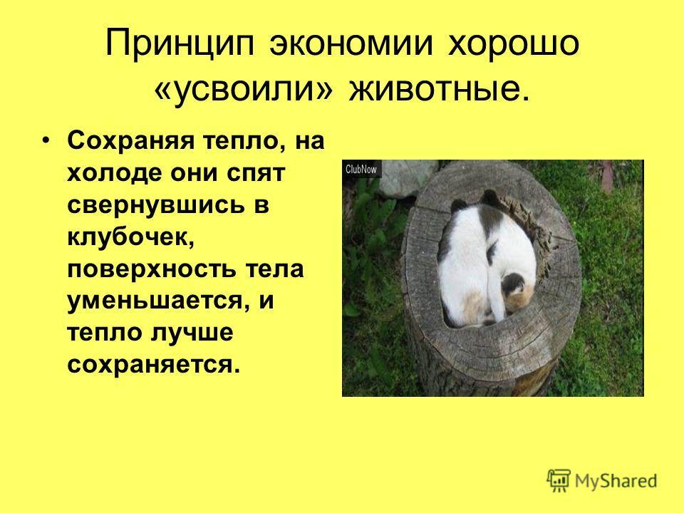 Принцип экономии хорошо «усвоили» животные. Сохраняя тепло, на холоде они спят свернувшись в клубочек, поверхность тела уменьшается, и тепло лучше сохраняется.