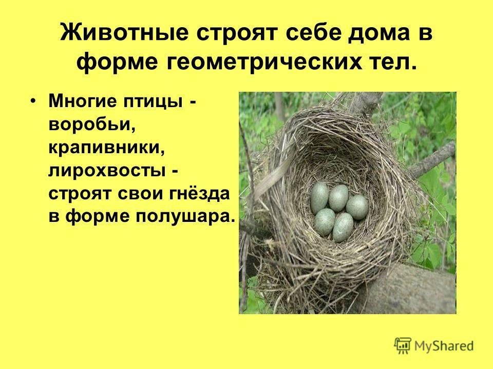 Животные строят себе дома в форме геометрических тел. Многие птицы - воробьи, крапивники, лирохвосты - строят свои гнёзда в форме полушара.