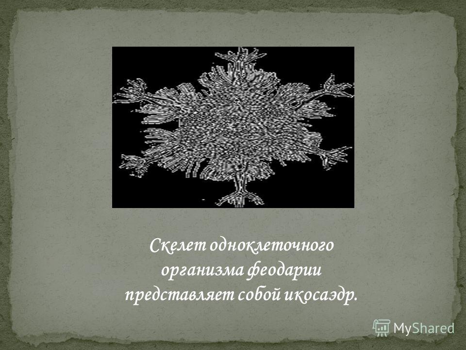 Скелет одноклеточного организма феодарии представляет собой икосаэдр.