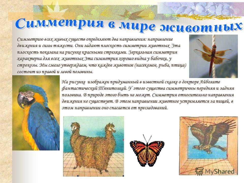 Симметрию всех живых существ определяют два направления: направление движения и силы тяжести. Они задают плоскость симметрии животных Эта плоскость показана на рисунке красными стрелками. Зеркальная симметрия характерна для всех животных Эта симметри