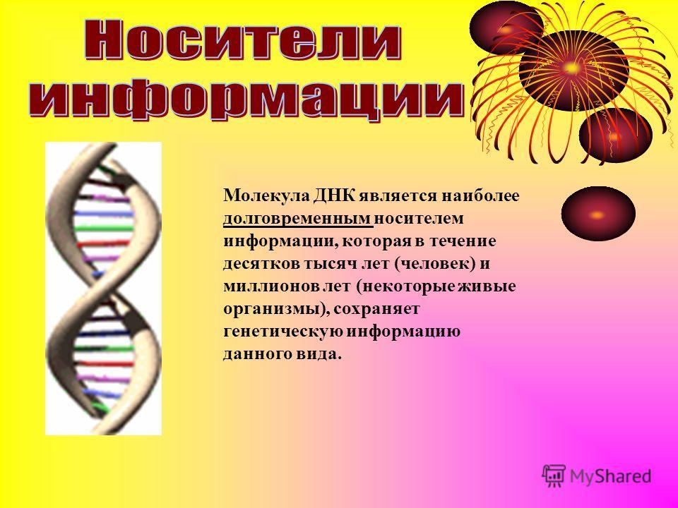 Молекула ДНК является наиболее долговременным носителем информации, которая в течение десятков тысяч лет (человек) и миллионов лет (некоторые живые организмы), сохраняет генетическую информацию данного вида.
