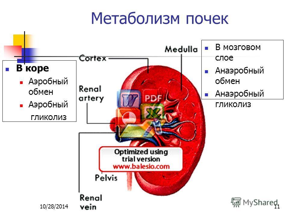 10/28/201411 Метаболизм почек В коре Aэробный обмен Aэробный гликолиз В мозговом слое Aнаэробный обмен Aнаэробный гликолиз