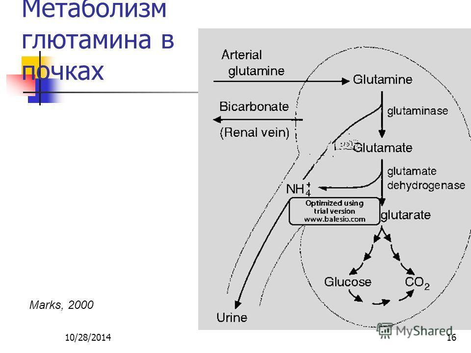 10/28/201416 Метаболизм глютамина в почках Marks, 2000