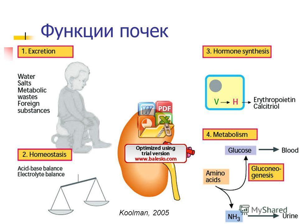 10/28/20144 Функции почек Koolman, 2005