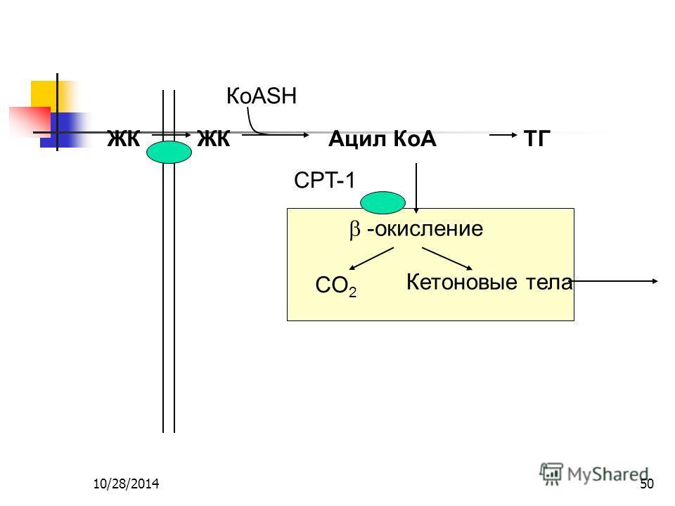 10/28/201450 ЖК Ацил КоАТГ КоASH -окисление CO 2 Кетоновые тела CPT-1
