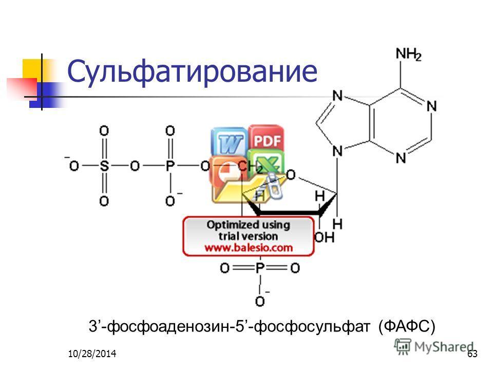 10/28/201463 Сульфатирование 3-фосфоаденозин-5-фосфосульфат (ФАФС)