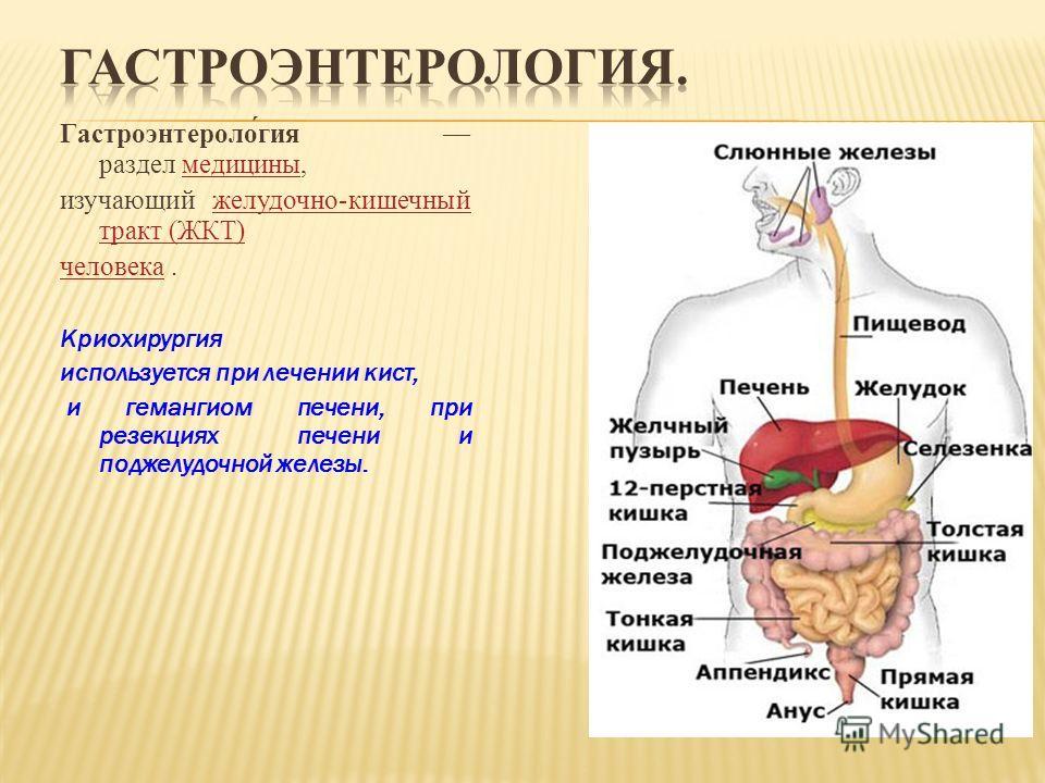 Гастроэнтероло́гия раздел медицины,медицины изучающий желудочно-кишечный тракт (ЖКТ)желудочно-кишечный тракт (ЖКТ) человекачеловека. Криохирургия используется при лечении кист, и гемангиом печени, при резекциях печени и поджелудочной железы.
