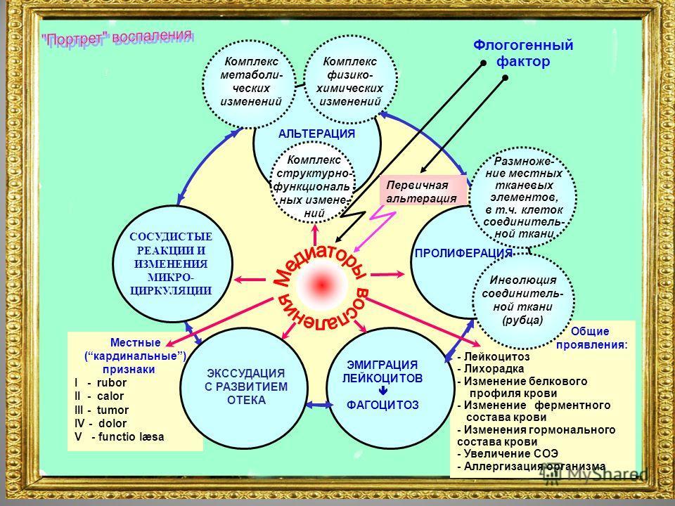 Общие проявления: - Лейкоцитоз - Лихорадка - Изменение белкового профиля крови - Изменение ферментного состава крови - Изменения гормонального состава крови - Увеличение СОЭ - Аллергизация организма СОСУДИСТЫЕ РЕАКЦИИ И ИЗМЕНЕНИЯ МИКРО- ЦИРКУЛЯЦИИ ЭМ