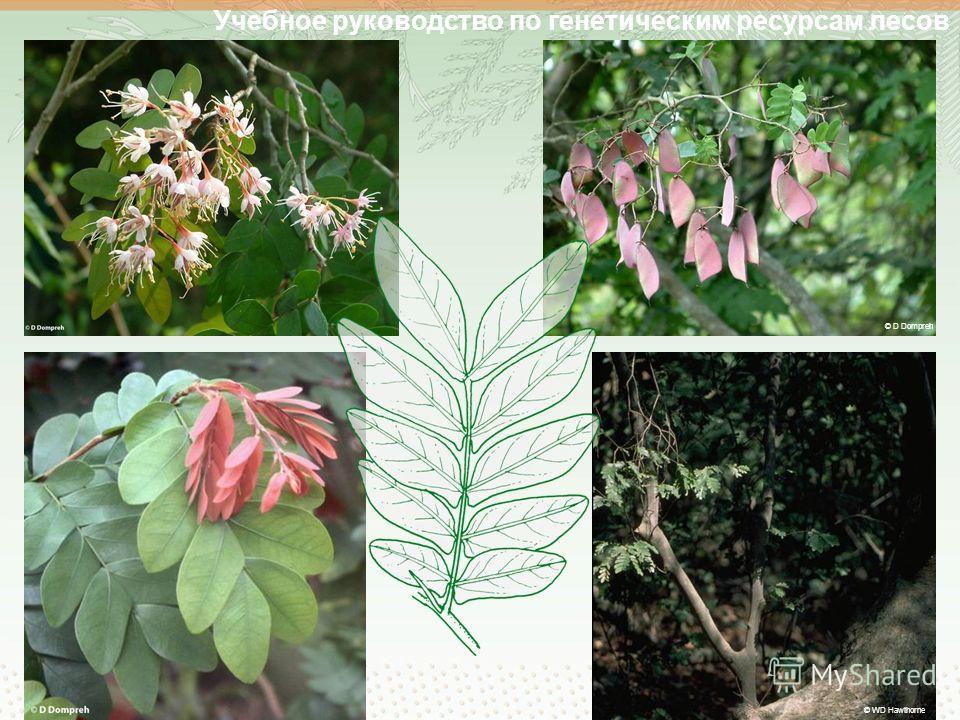 Учебное руководство по генетическим ресурсам лесов © D Dompreh © WD Hawthorne