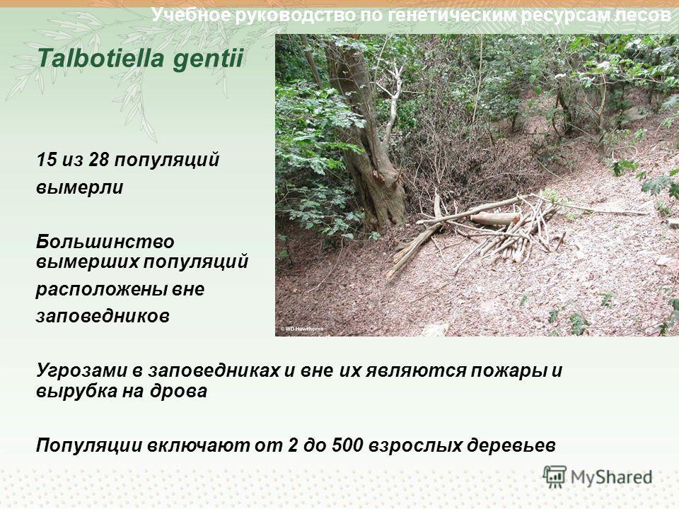 Учебное руководство по генетическим ресурсам лесов Talbotiella gentii 15 из 28 популяций вымерли Большинство вымерших популяций расположены вне заповедников Угрозами в заповедниках и вне их являются пожары и вырубка на дрова Популяции включают от 2 д
