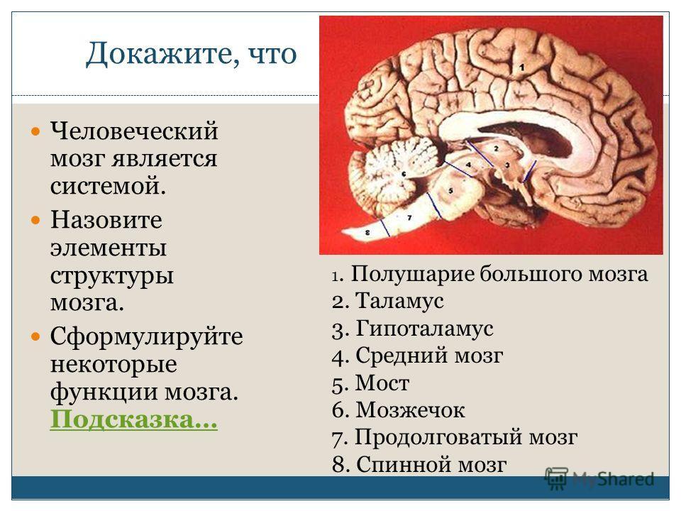 Докажите, что Человеческий мозг является системой. Назовите элементы структуры мозга. Сформулируйте некоторые функции мозга. Подсказка… Подсказка… 1. Полушарие большого мозга 2. Таламус 3. Гипоталамус 4. Средний мозг 5. Мост 6. Мозжечок 7. Продолгова