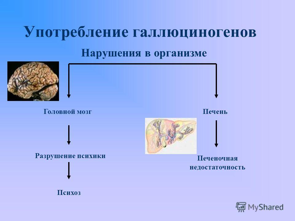 Употребление галлюциногенов Головной мозг Психоз Печень Печеночная недостаточность Разрушение психики Нарушения в организме