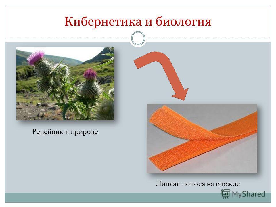 Кибернетика и биология Репейник в природе Липкая полоса на одежде