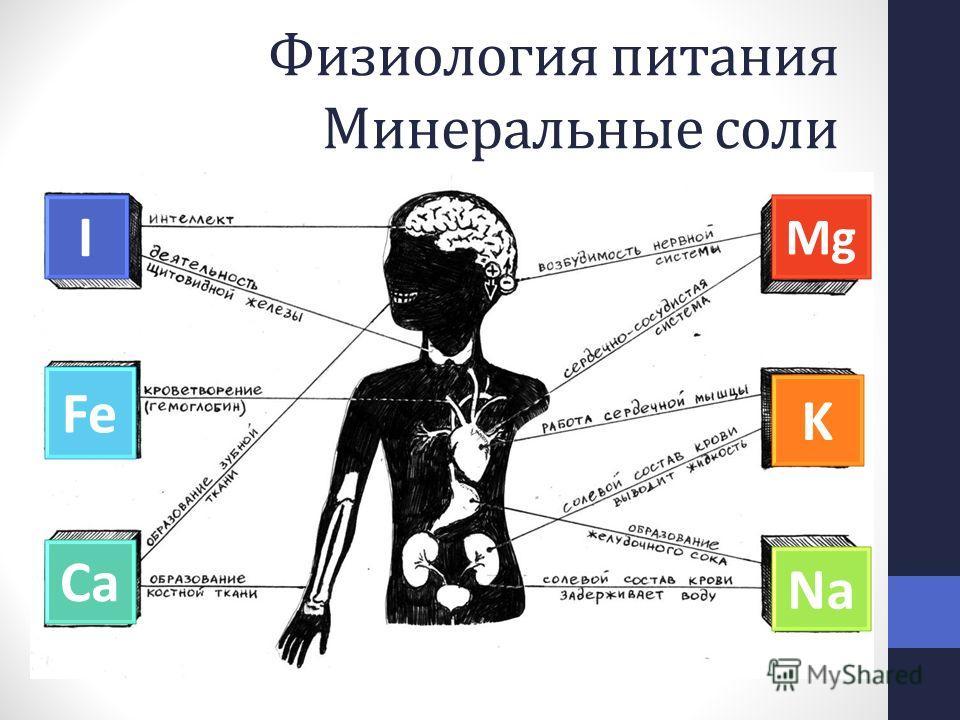Физиология питания Минеральные соли I Mg Fe Ca K Na