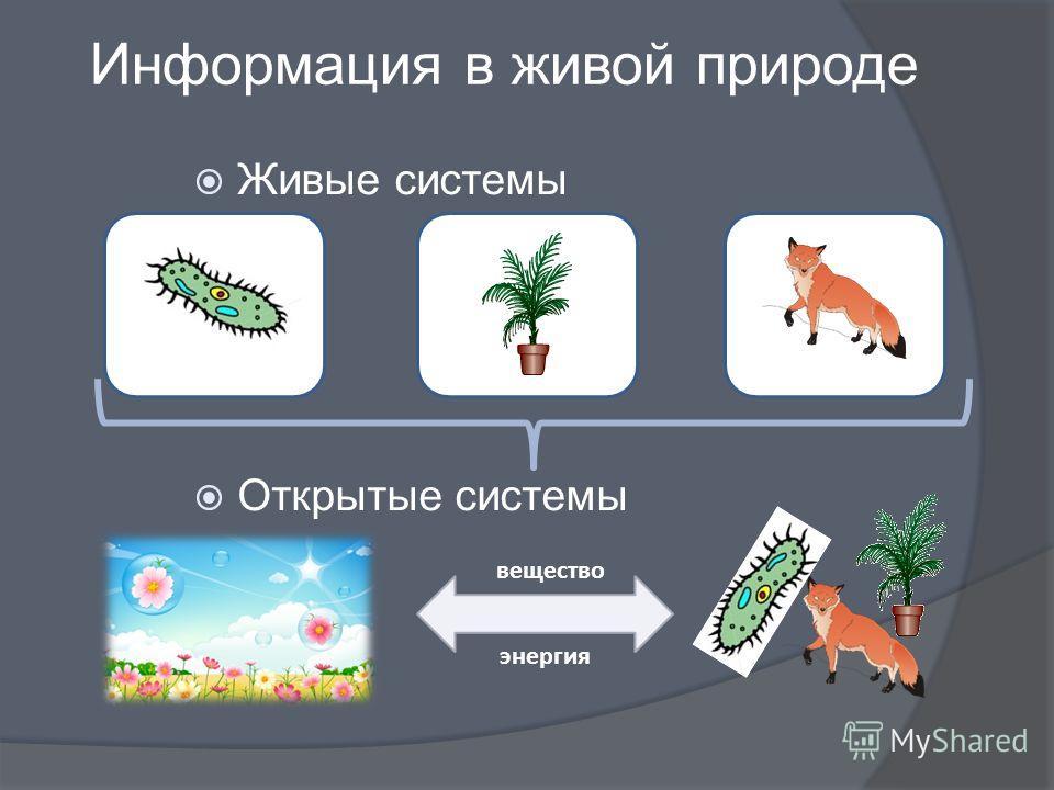 вещество энергия Информация в живой природе Живые системы Открытые системы
