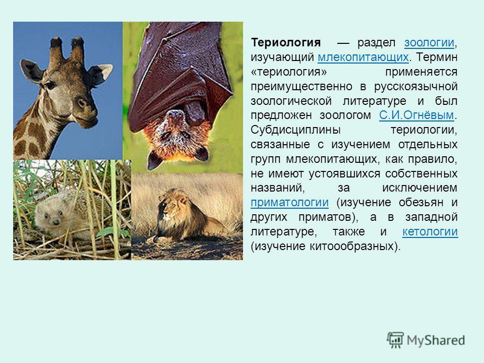 Териология раздел зоологии, изучающий млекопитающих. Термин «териология» применяется преимущественно в русскоязычной зоологической литературе и был предложен зоологом С.И.Огнёвым. Субдисциплины териологии, связанные с изучением отдельных групп млекоп