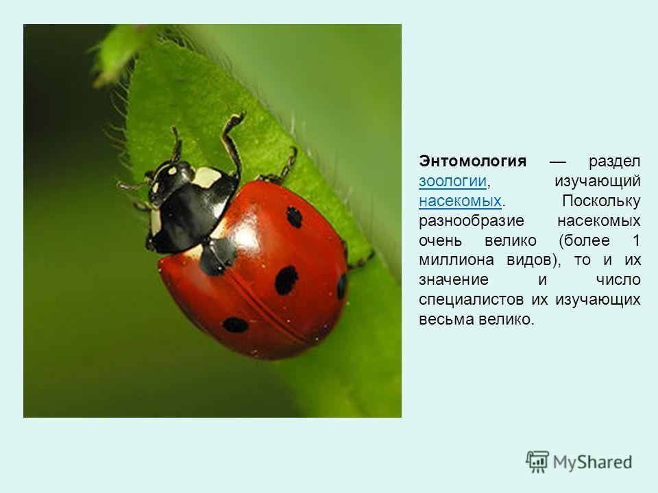 Энтомология раздел зоологии, изучающий насекомых. Поскольку разнообразие насекомых очень велико (более 1 миллиона видов), то и их значение и число специалистов их изучающих весьма велико. зоологии насекомых
