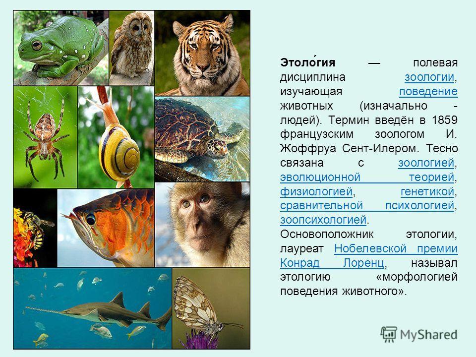 Этоло́гия полевая дисциплина зоологии, изучающая поведение животных (изначально - людей). Термин введён в 1859 французским зоологом И. Жоффруа Сент-Илером. Тесно связана с зоологией, эволюционной теорией, физиологией, генетикой, сравнительной психоло