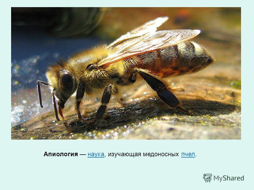 Апиология наука, изучающая медоносных пчел.наукапчел