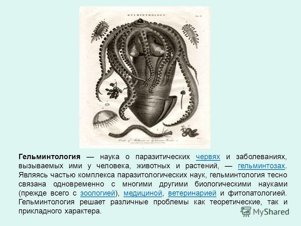 Гельминтология наука о паразитических червях и заболеваниях, вызываемых ими у человека, животных и растений, гельминтозах. Являясь частью комплекса паразитологических наук, гельминтология тесно связана одновременно с многими другими биологическими на