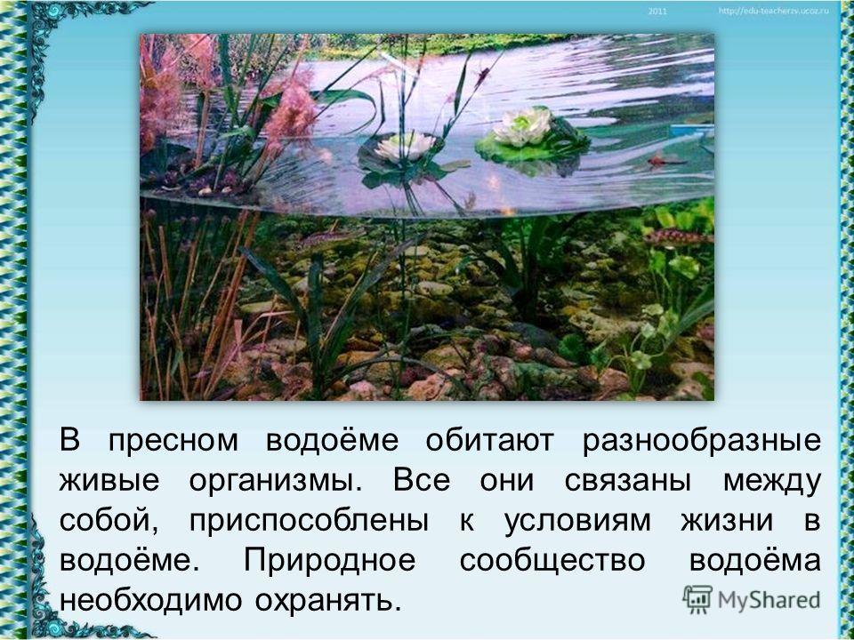 В пресном водоёме обитают разнообразные живые организмы. Все они связаны между собой, приспособлены к условиям жизни в водоёме. Природное сообщество водоёма необходимо охранять.
