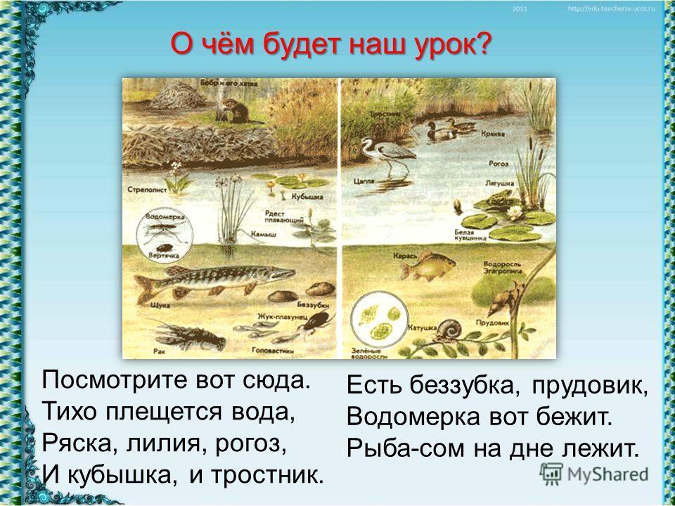 Есть беззубка, прудовик, Водомерка вот бежит. Рыба-сом на дне лежит. О чём будет наш урок? Посмотрите вот сюда. Тихо плещется вода, Ряска, лилия, рогоз, И кубышка, и тростник.