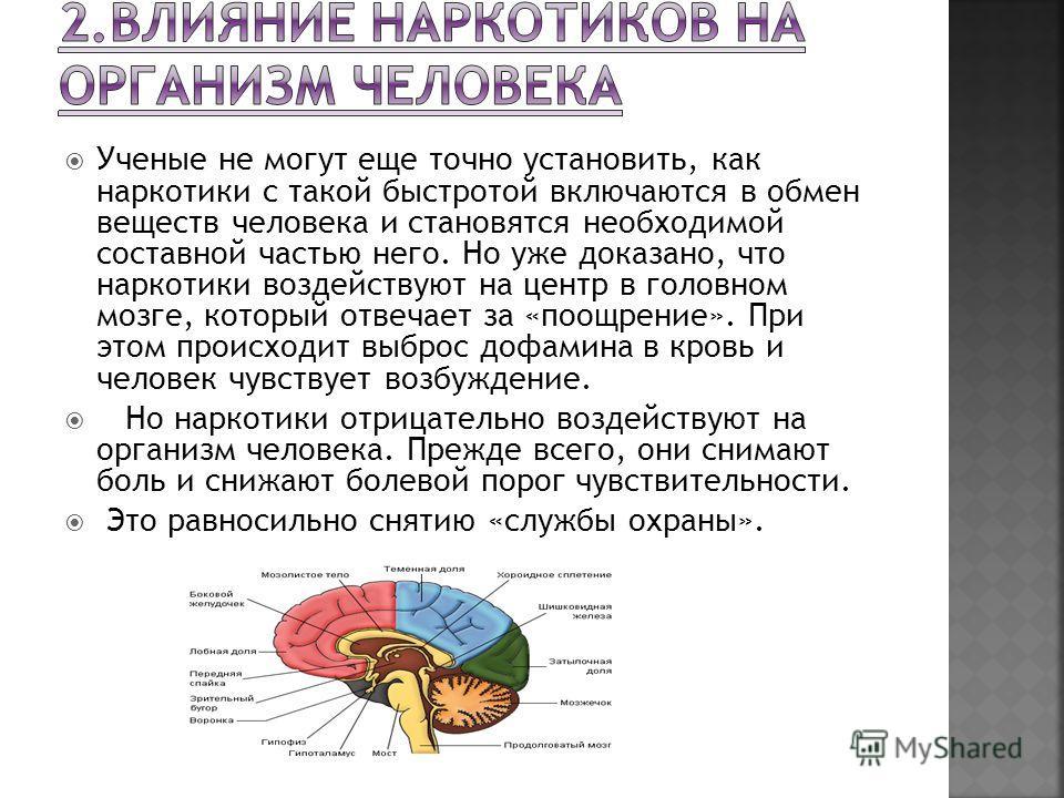 Ученые не могут еще точно установить, как наркотики с такой быстротой включаются в обмен веществ человека и становятся необходимой составной частью него. Но уже доказано, что наркотики воздействуют на центр в головном мозге, который отвечает за «поощ