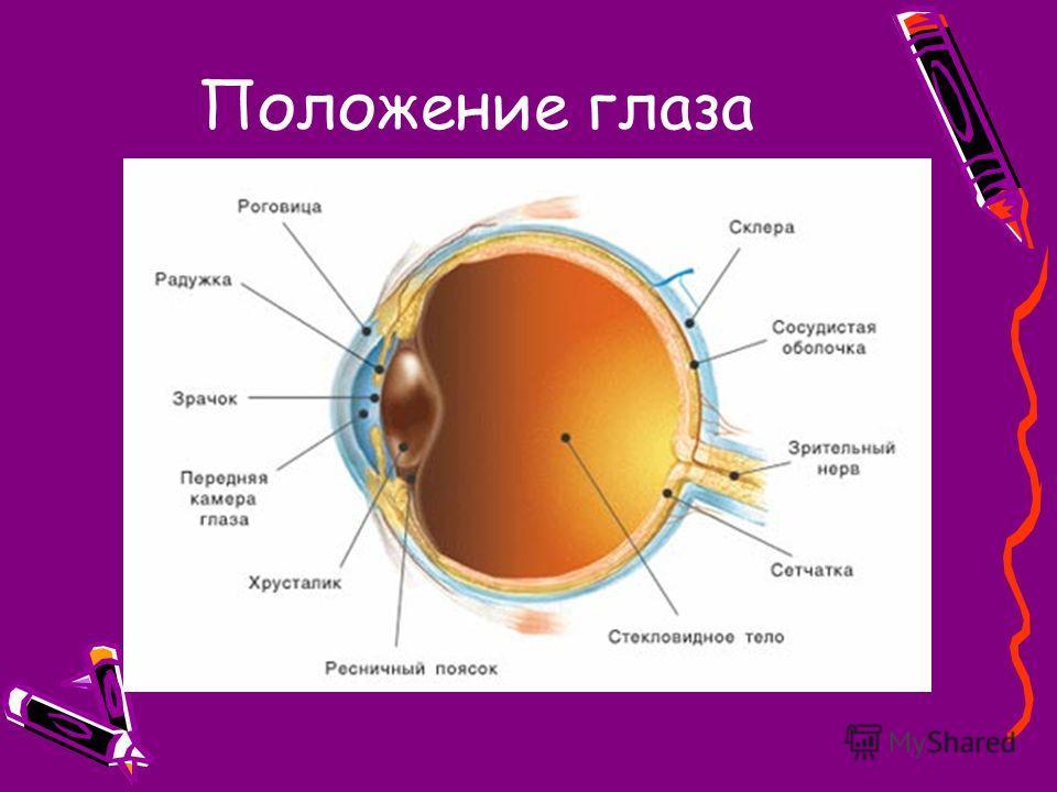 Положение глаза
