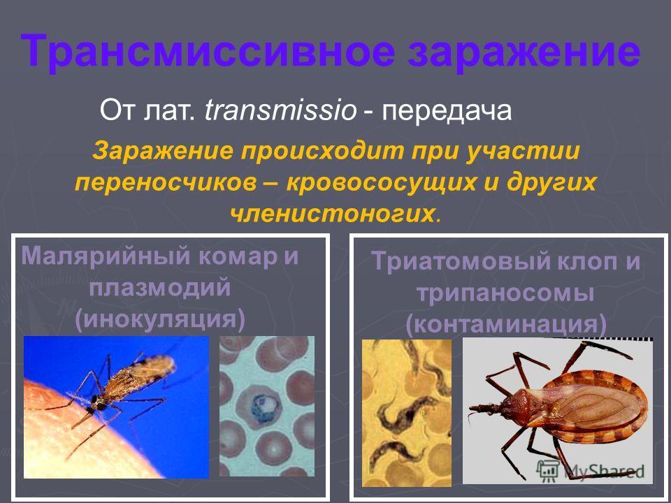 Трансмиссивное заражение Заражение происходит при участии переносчиков – кровососущих и других членистоногих. От лат. transmissio - передача Малярийный комар и плазмодий (инокуляция) Триатомовый клоп и трипаносомы (контаминация)