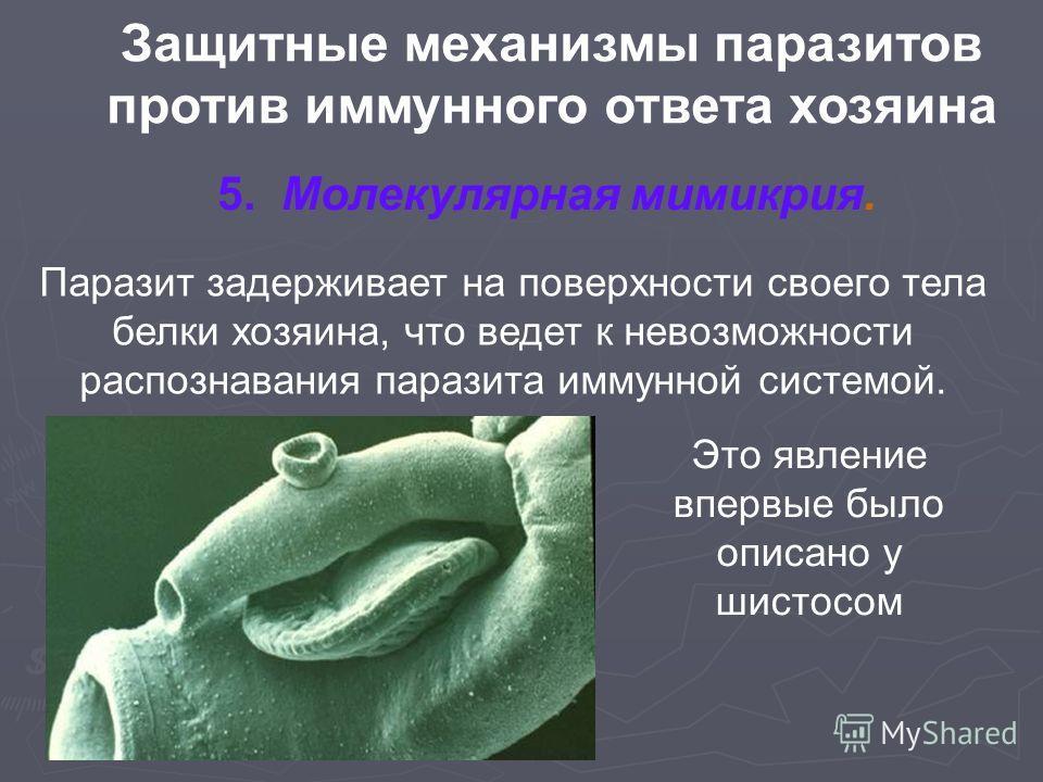 Защитные механизмы паразитов против иммунного ответа хозяина 5. Молекулярная мимикрия. Паразит задерживает на поверхности своего тела белки хозяина, что ведет к невозможности распознавания паразита иммунной системой. Это явление впервые было описано