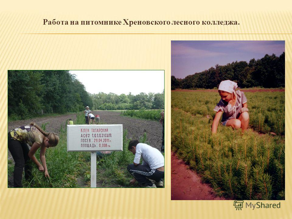 Работа на питомнике Хреновского лесного колледжа.
