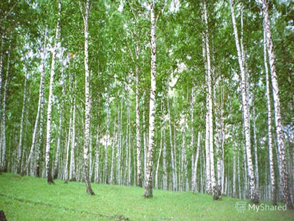 Мы все с вами любим отдыхать на природе: в лесу, на речке, на лугу, в поле. Но надо помнить, что в природе встречается много опасностей.
