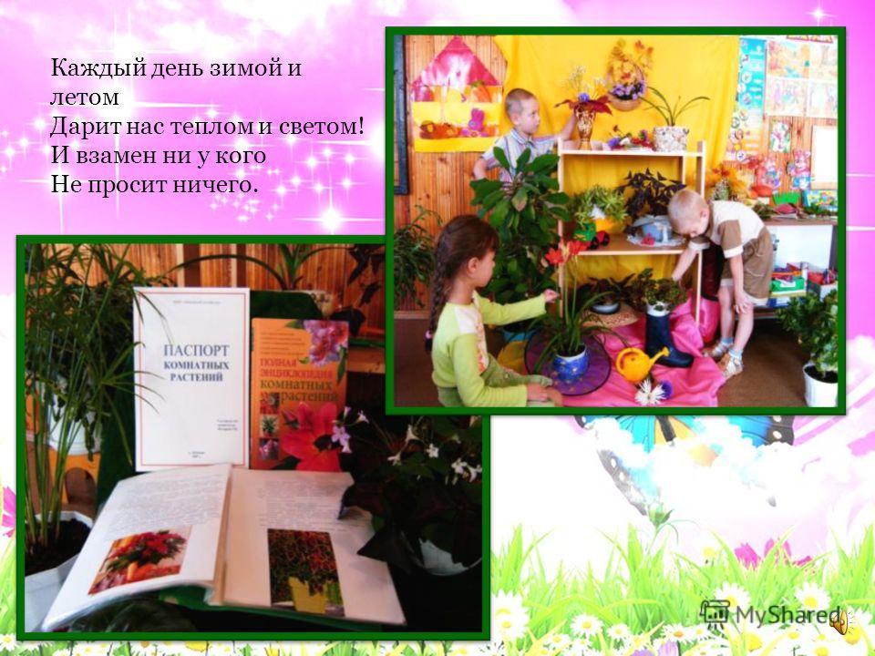 Уголок природы Уголок природы. Мы природу уважаем, Бережем и понимаем. Нас в любое время года Учит мудрая природа. Птицы учат пению, Паучок терпению. Пчелы в поле и в саду Обучают нас труду, И к тому же в их труде Все по справедливости. Отражение в в
