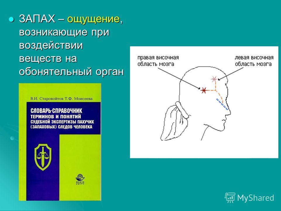 ЗАПАХ – ощущение, возникающие при воздействии веществ на обонятельный орган ЗАПАХ – ощущение, возникающие при воздействии веществ на обонятельный орган
