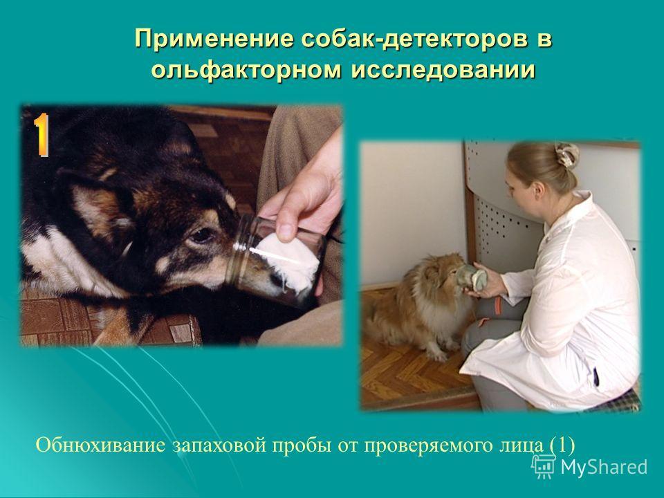 Применение собак-детекторов в ольфакторном исследовании Обнюхивание запаховой пробы от проверяемого лица (1)