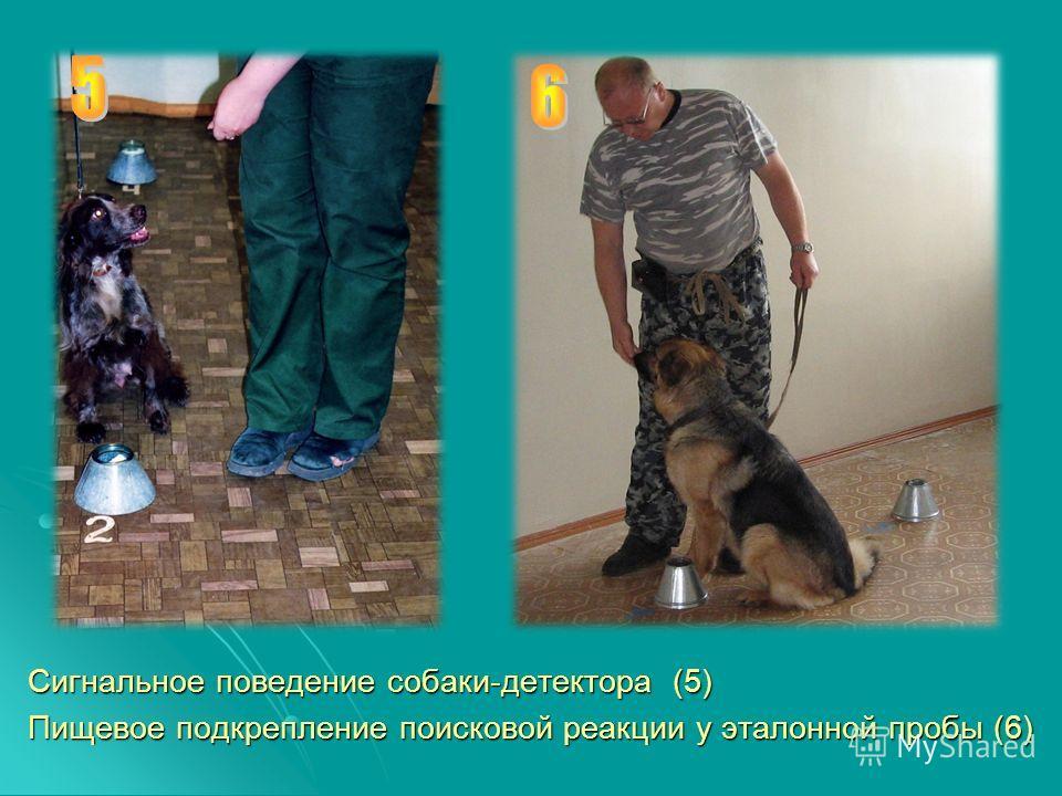 Сигнальное поведение собаки-детектора (5) Пищевое подкрепление поисковой реакции у эталонной пробы (6)