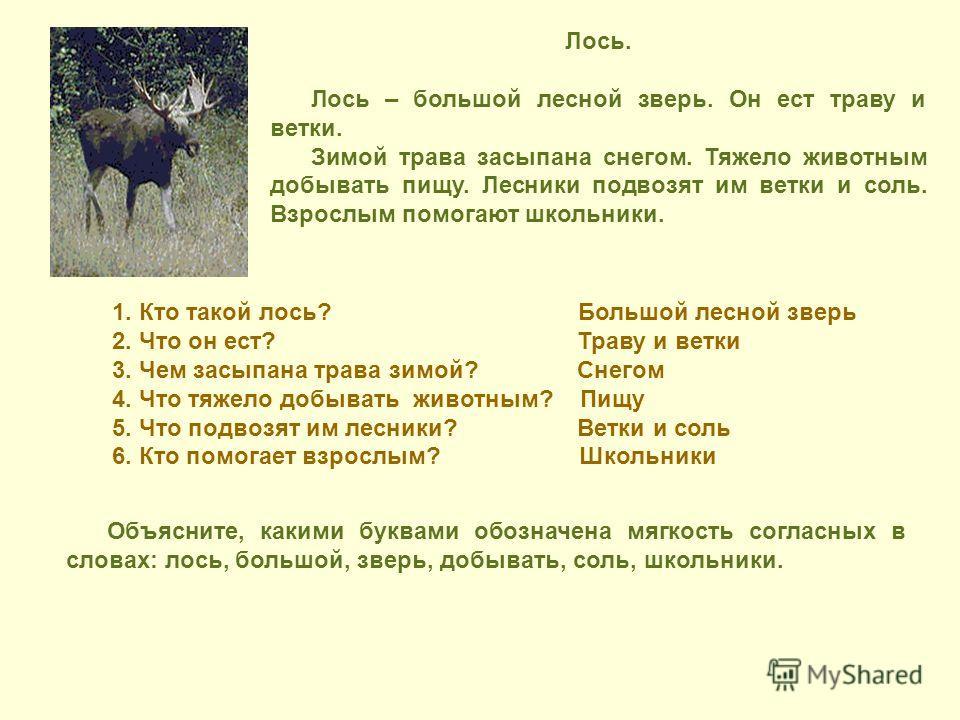 Лось. Лось – большой лесной зверь. Он ест траву и ветки. Зимой трава засыпана снегом. Тяжело животным добывать пищу. Лесники подвозят им ветки и соль. Взрослым помогают школьники. 1. Кто такой лось? Большой лесной зверь 2. Что он ест? Траву и ветки 3