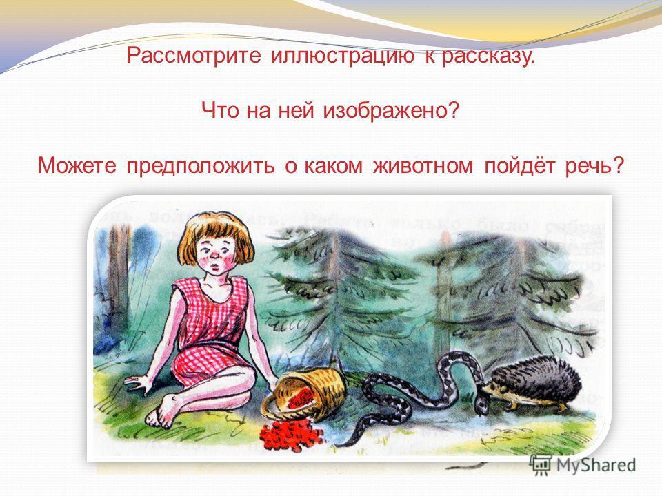 Рассмотрите иллюстрацию к рассказу. Что на ней изображено? Можете предположить о каком животном пойдёт речь?