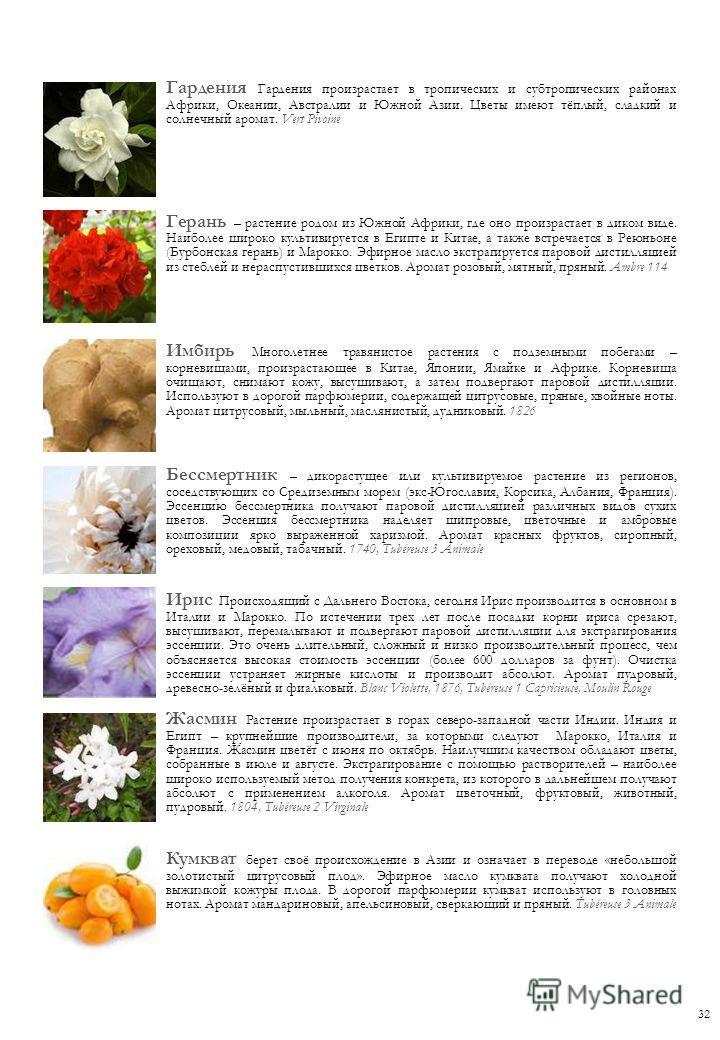 Гардения Гардения произрастает в тропических и субтропических районах Африки, Океании, Австралии и Южной Азии. Цветы имеют тёплый, сладкий и солнечный аромат. Vert Pivoine Герань – растение родом из Южной Африки, где оно произрастает в диком виде. На