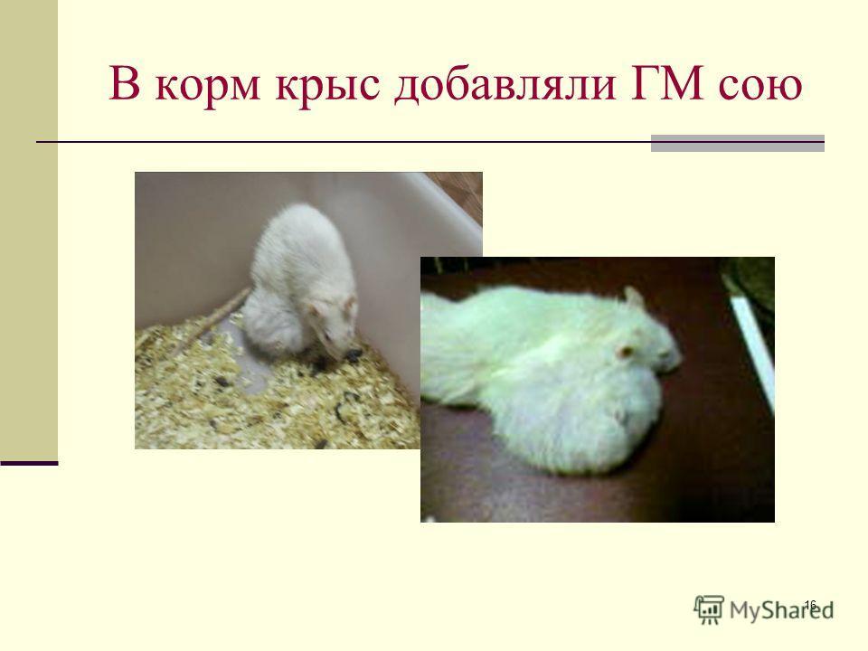 16 В корм крыс добавляли ГМ сою